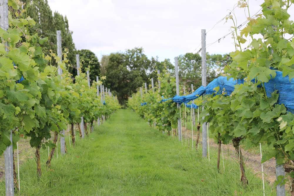 thaborhoeve-wijnproeverij friesland